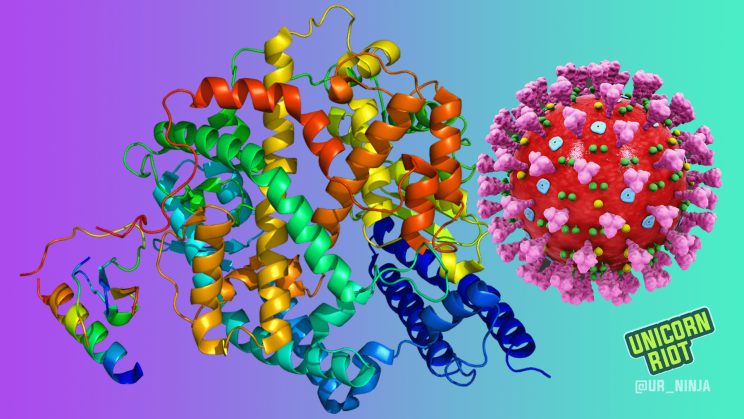 Illustration of a coronavirus particle and the ACE2 enzyme lining the cells of human respiratory tracts, to which the virion attaches itself.